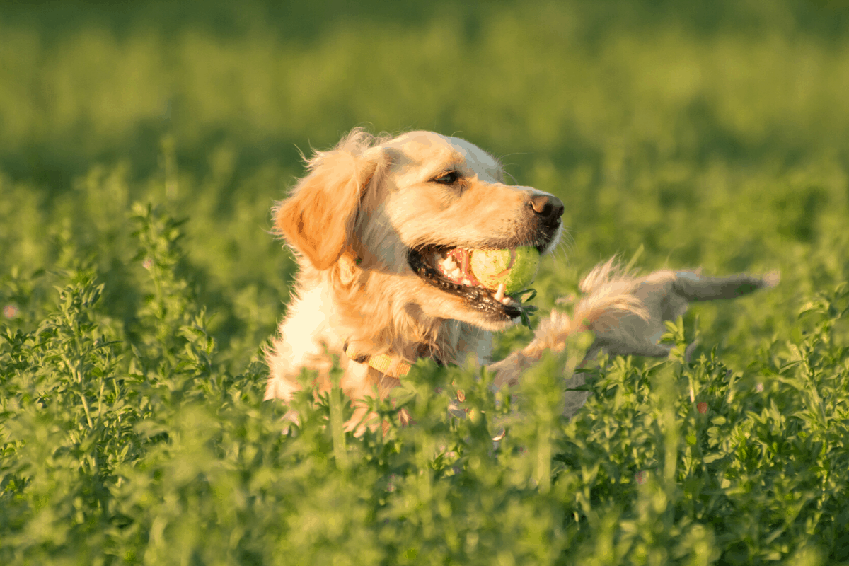 best flea and tick prevention for dogs