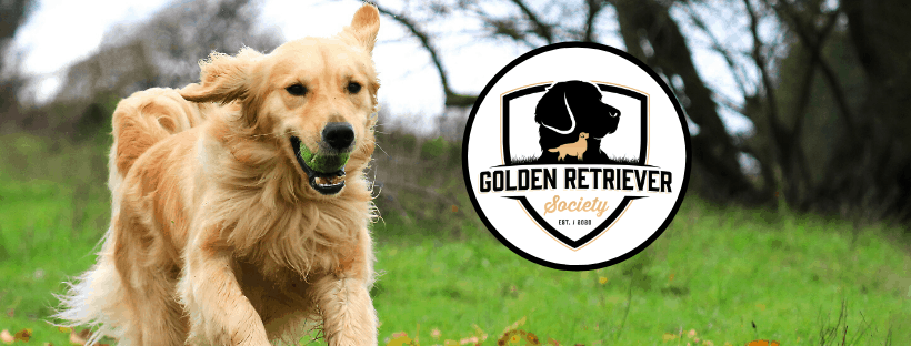 Golden Retriever Society About Us