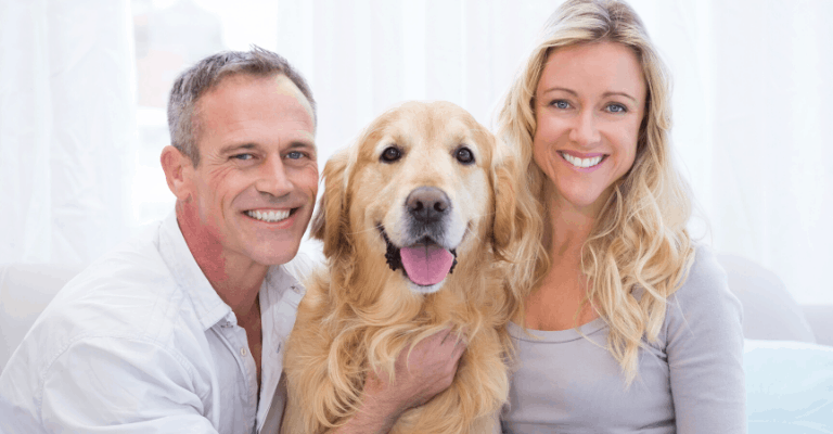 How You Can Help Your Golden Retriever Stay Healthy