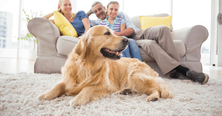Cost to Adopt a Golden Retriever
